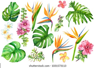 set of tropical plants and flowers on white background, watercolor hand drawing,  leaves of palms, monstera, succulent,  protea, strelitzia, plumeria, hibiscus, mallow