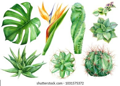 set of tropical plants and flowers on white background, watercolor hand drawing,  leaves of palms, monstera, succulent, cactus,  strelitzia