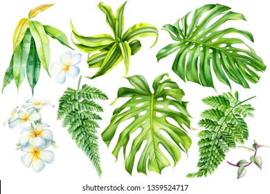 set of tropical plants, liana, monstera leaf, plumeria flowers, fern, ficus on an isolated white background, watercolor botanical painting, hand drawing