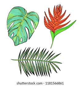Set of tropical plants. Monstera, palm leaves, heliconia. isolated on white.