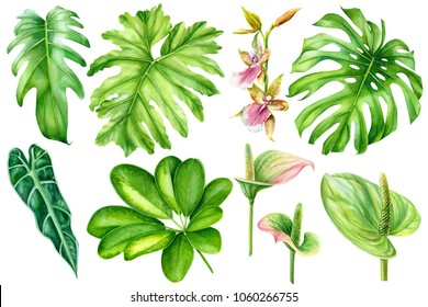 set tropical plants, palm leaves, monstera, anthurium, orchid, flora watercolor illustration, botanical painting, hand drawing