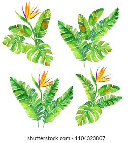 set of tropical watercolor bouquets. Tropical palm illustration in artistic style.