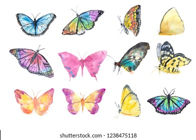 Set of twelve colorful watercolor butterflies on white background, watercolor illustrator hand painted