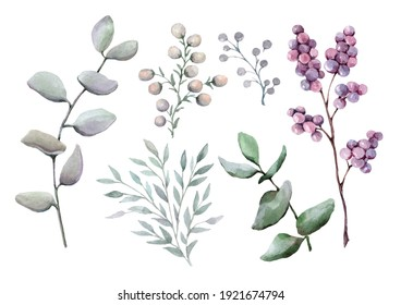 Set of twigs with decorative berries and green eucalyptus leaves. Hand drawn watercolor isolated elements on white background for design of cards, wedding invitations, background, packaging, print.