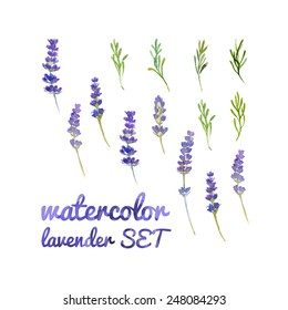 Set of twigs and leaves of lavender painted watercolor. Hand drawing.