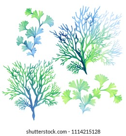 set of underwater elements: algae seaweed, corals, beautiful marine drawings, underwater plants.
