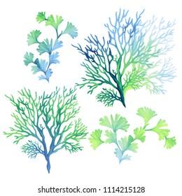 set of underwater elements: algae seaweed, corals, beautiful marine drawings, underwater plants.