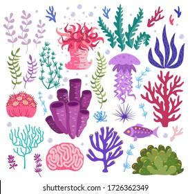 Set of underwater ocean coral reef plants, corals. Tropical coral-reef elements, aquatic and aquarium seaweeds. Marine algae, jellyfish, fish, sea wild life, sponges and seagrasses elements collection