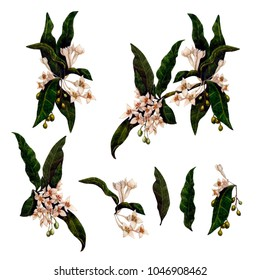 Set of variations of the watercolor illustration of a blooming olive branch