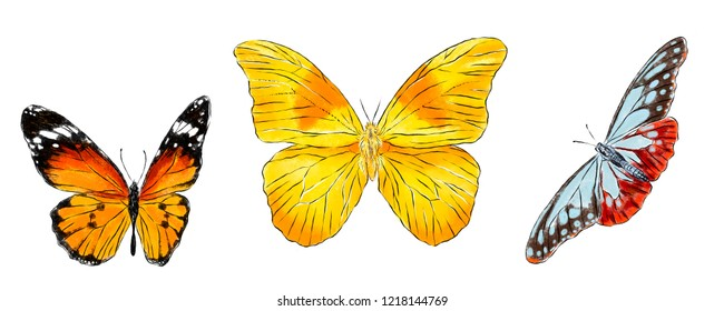 Set of various butterflies isolated on white background. Colorfull flying insects. Natural bright wildlife detailed illustration