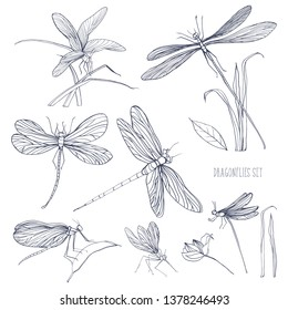 Set of various dragonflies in different poses. Monochrome hand drawn collection flying adder.
