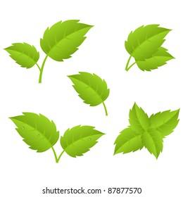 Set of various green leaves.