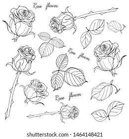 set of vectorized images of roses, flowers and leaves, on white background,