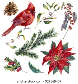 Set vintage watercolor Christmas elements of holly, poinsettia, pinecone, spruce branch and bird red cardinal, watercolor illustration isolated on white background
