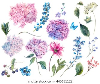 Set vintage watercolor elements of Blooming Hydrangea and garden flowers, leaves branches flowers and wildflowers, watercolor illustration isolated on white background