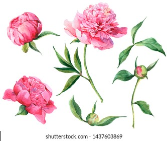 Set of vintage watercolor pink flowers peonies, leaves, branches, watercolor illustration isolated on white background, natural design elements