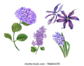 Set of violet flowers (Hydrangea, Lilac, Hyacinth, Clematis) watercolor illustration isolated on a white background