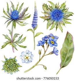 Set of watercolor blue flowers and green leaves