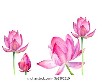 Set of watercolor botanical illustration Lotus flower pink. Element for design of invitations, movie posters, logo, banners, cards and other objects. Symbol of India,  yoga and meditation.