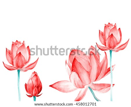 Set watercolor botanical illustration lotus flower stock set of watercolor botanical illustration lotus flower pink element for design of invitations movie mightylinksfo