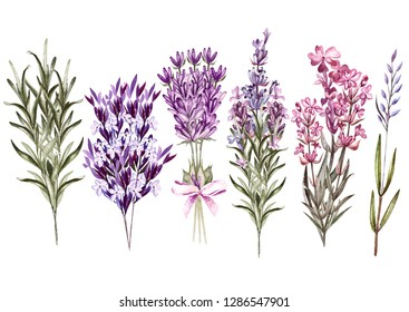 Set of watercolor bouquet lavender flowers on white background. Illustration
