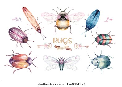 Set of watercolor bright beetles, bugs fly and bees. Isolated colorful cartoon buttle and bug. Insect set