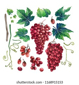 Set of watercolor bunches of red grapes, green leaves and branches. Hand painted botanical design elements isolated on white background