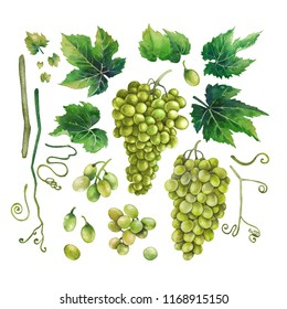 Set of watercolor bunches of white grapes, green leaves and branches. Hand painted botanical design elements isolated on white background