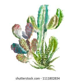 Set of watercolor cactus, succulents and floral elements. Vintage watercolor botanical illustration for textile, print, invitation, party. Tropical concept.
