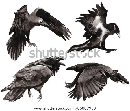 set of watercolor crows set for halloween black ominous crow
