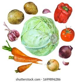 Set of watercolor drawings of fresh raw vegetables. Ingredients for soup, print for packaging, vegetarianism.