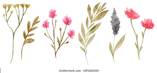 Set of watercolor dried flowers isolated on white background. Hand drawn wildflowers illustration. Flower clipart. Autumn design to fashion fabric, textile, cover, wrapping paper product, blog, cloth