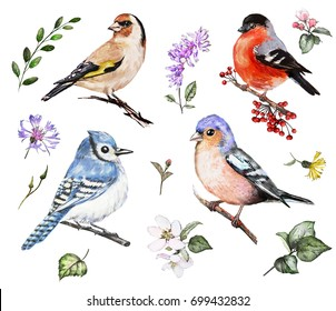 Set watercolor elements of bird and wildflowers, collection garden and wild flowers, leaves. illustration isolated on white background - goldfinch, bullfinch, finch, blue jay