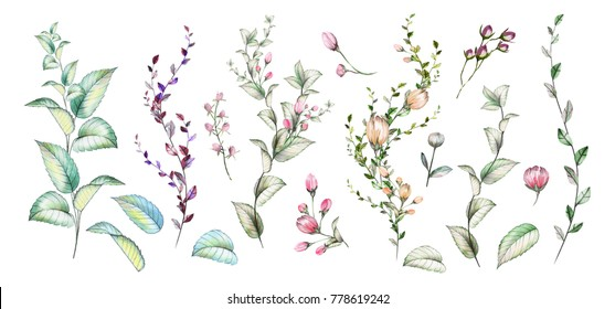 Set of watercolor elements. Collection of herbs , flowers, and leaves.Floral illustration.