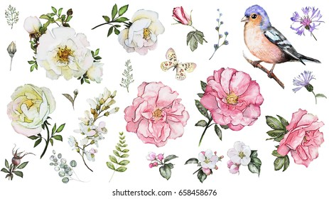 Set watercolor elements of flower rose, collection garden and wild flowers, leaves, branches, illustration isolated on white background, bird - finch, butterfly, pink  bud