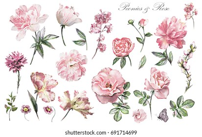 Set watercolor elements of flower rose, peonies, collection garden and wild flowers, leaves, branches, illustration isolated on white background,  pink  bud, herbs