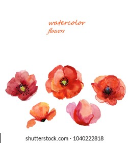 Set watercolor elements pink,red flower,collection romantic garden and wild poppies, Floral illustration isolated on white background,sketch hand painting botanical floral.can be used as greeting card