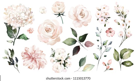 Set watercolor elements of roses, collection garden flowers, leaves, branches. Botanic  illustration isolated on white background.  Wedding floral design