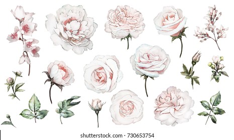 Set watercolor elements of white rose, collection garden flowers, leaves, branches, Botanic  illustration isolated on white background.  bud of roses