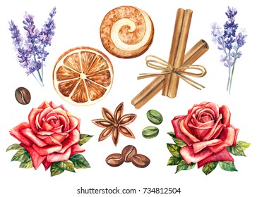 set of watercolor elements for your design, cinnamon, coffee, biscuit, anise, dried orange, lavender and roses.