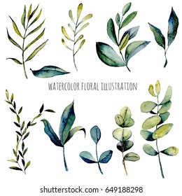 Set of watercolor eucalyptus branches and other green plants illustration, hand drawn isolated on a white background, for a greeting card, decoration of a wedding invitation