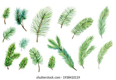 Set of watercolor evergreen branches, pine tree, fir, spruce coniferous plants, christmas decorations. Illustration isolated on white background