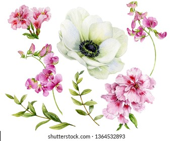 Set of watercolor flowers. Anemone, sweet peas and green twigs on a white background.