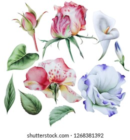 Set with watercolor flowers. Eustoma. Rose. Calla. Hand drawn.