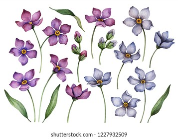 Set of watercolor flowers isolated on a white background, hand painted illustration of purple and blue floral elements for greeting cards and invitations.