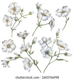 Set of watercolor flowers isolated on a white background, hand painted illustration of gypsophila, floral elements for greeting cards and invitations.
