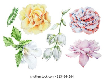 Set with watercolor flowers.  Rose. Mallow. Yucca. Hand drawn.