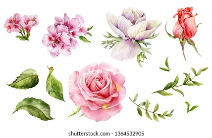 Set of watercolor flowers. Roses, anemone, hedecius and green twigs.