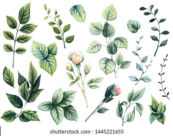 Set of Watercolor Green Leaves, Wild Herbs and Rose Buds