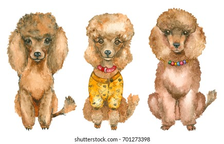 Set of watercolor hand drawn poodles isolated on white. Poodle dressed and with jewelry. Watercolor painting, animal illustration.